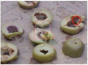 חלקי רימות שנותרו בתוך הזית לאחר חיתוכו לטבעות