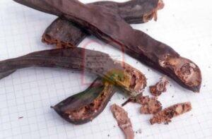 חרוב נגוע במזיקי מחסן, ניתן להבחין בפסולת החרקים