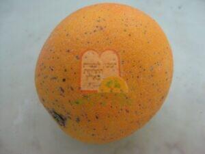 כנימות מגן על גבי תפוז