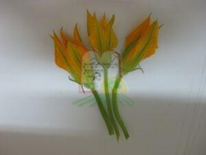 פרחי דלעת