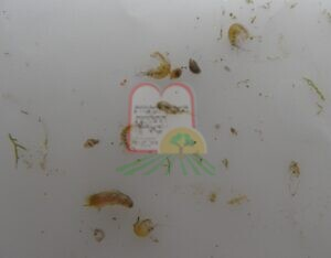 חרקי מים מליחים מסוגים שונים