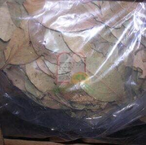 חיפושית טבק שהצטברו באריזות במחסנים של החומרי גלם