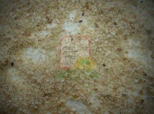 פירורי לחם נגועים בחיפושיות מחסן