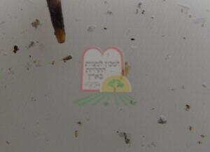 חרקי שדה שנותרו בהיבסקוס מיובש, הופרדו לאחר שטיפה במים חמים וסינון