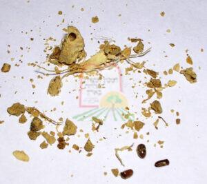חיפושיות הטבק בג'ינג'ר (זנגביל)