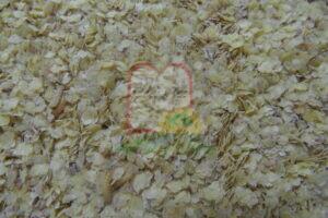 זחלי חיפושית טמונים בנבט חיטה
