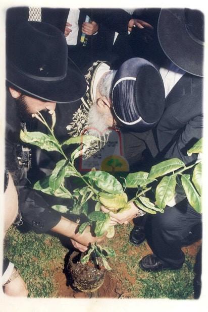 מרן הגר'ע יוסף שותל עץ בחוות המכון