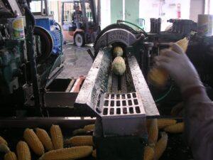 מכונה המפרידה את גרגרי התירס מהקלח תירס