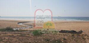 עופות בעצירת ביניים לאכילה בחופי אגאדיר במרוקו למרגלות מפעלי שימורים