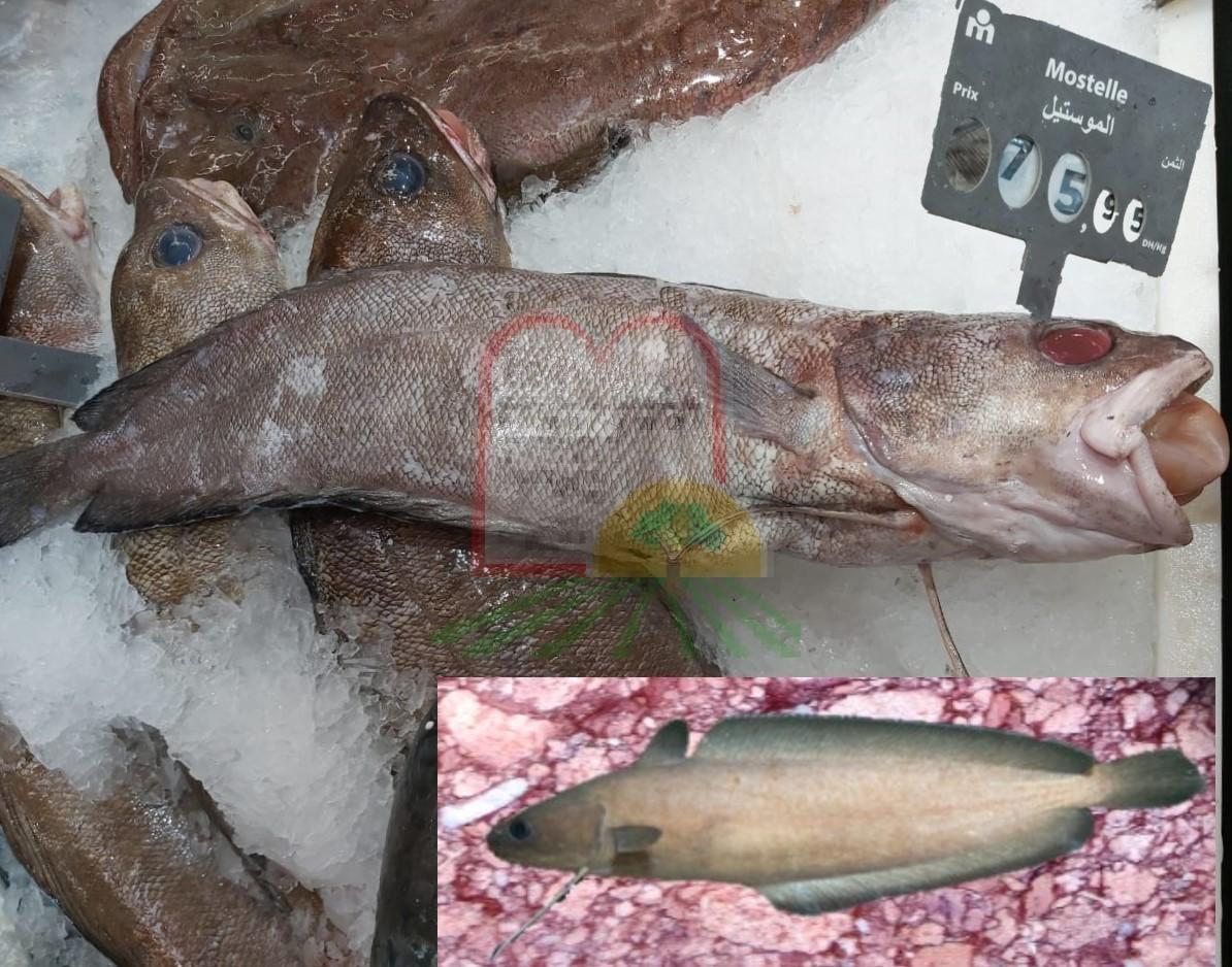 דונים הסלעים במכירה בשווקים במרוקו, בתמונה הקטנה הדג עם הסנפירים פרושים
