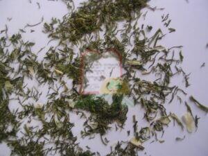 חיפושיות בתוך שמיר יבש