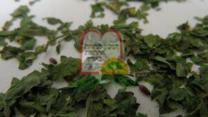 חיפושיות בפטרוזיליה מיובשת